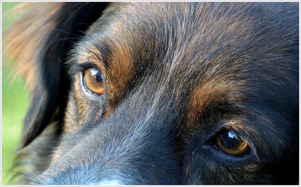 Lust auf Hundeportraits?
