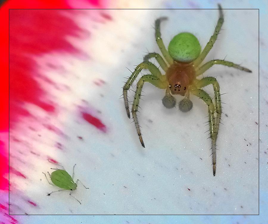 Zeigt her eure Spinnen