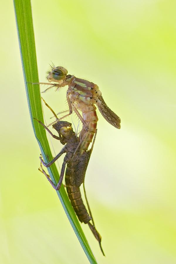 Der Bock und die Libelle...