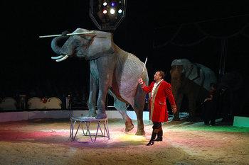 Zirkus 1.jpg