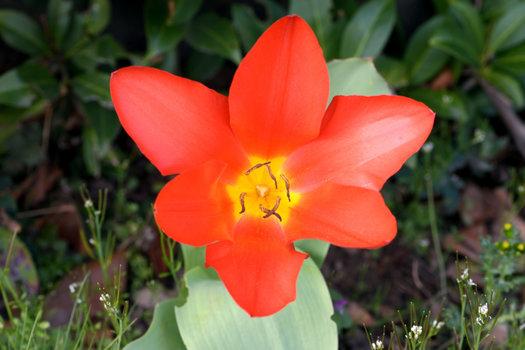Garten1_00001DSC_1061.jpg