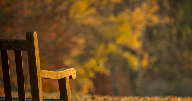 goldene Stunde: Gartenbank im Anschnitt vor Herbstlaub