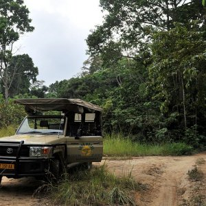 s625 Safariauto im Lope Nationalpark 5739