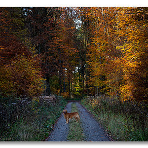 20191114_Tell-Herbstbuchen_0006-WEB-FORUM.jpg