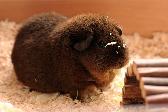 zeigt her alles was hoppelt und springt kaninchen hamster und co netzwerk fotografie. Black Bedroom Furniture Sets. Home Design Ideas